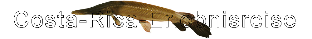 Costa Rica, Urzeitfisch den wir nachher wieder zurueck in den Fluss setzten.
